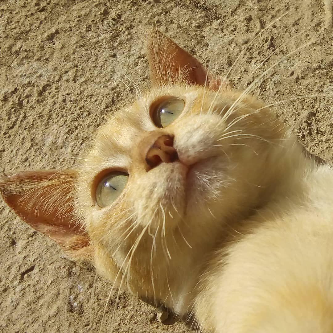 How To Decode Your Cat S Behavior In 2020 Cats Crazy Cat People Cat Behavior