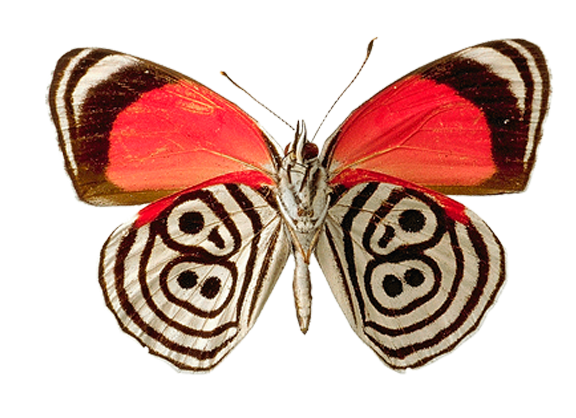 Butterfly Png Image Butterfly Art Print Butterfly Pictures Butterfly Painting