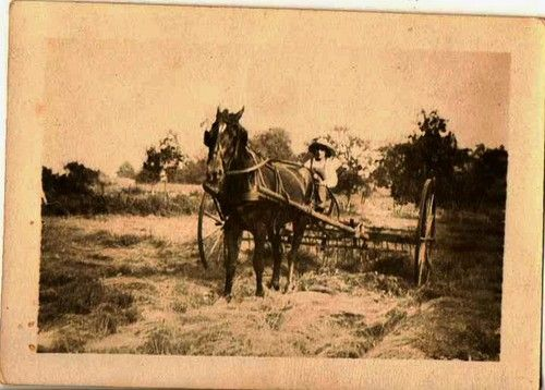 Antique photograph man riding in haybailer Selling on ebay