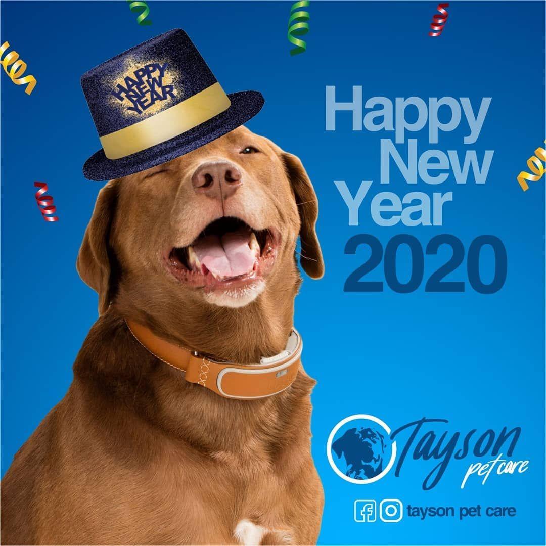 Happy New Year Dog Cat Petcare Tayson Happy New Year Dog