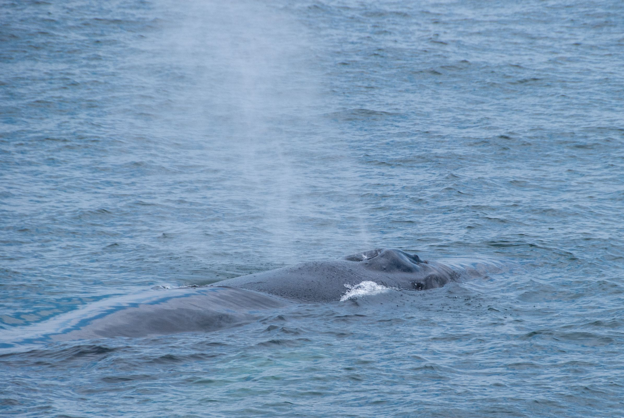 Whale Watching Boston Top Tips Before You Go With Images