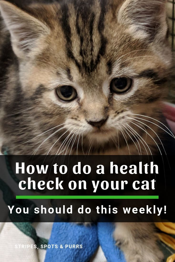 Why Your Cat Needs A Weekly Health Check Kitten Health Pet Care Cats Cat Health Problems