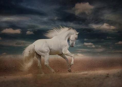 Free Image On Pixabay White Horse Running Gallop Free Horses Horses Running Horses