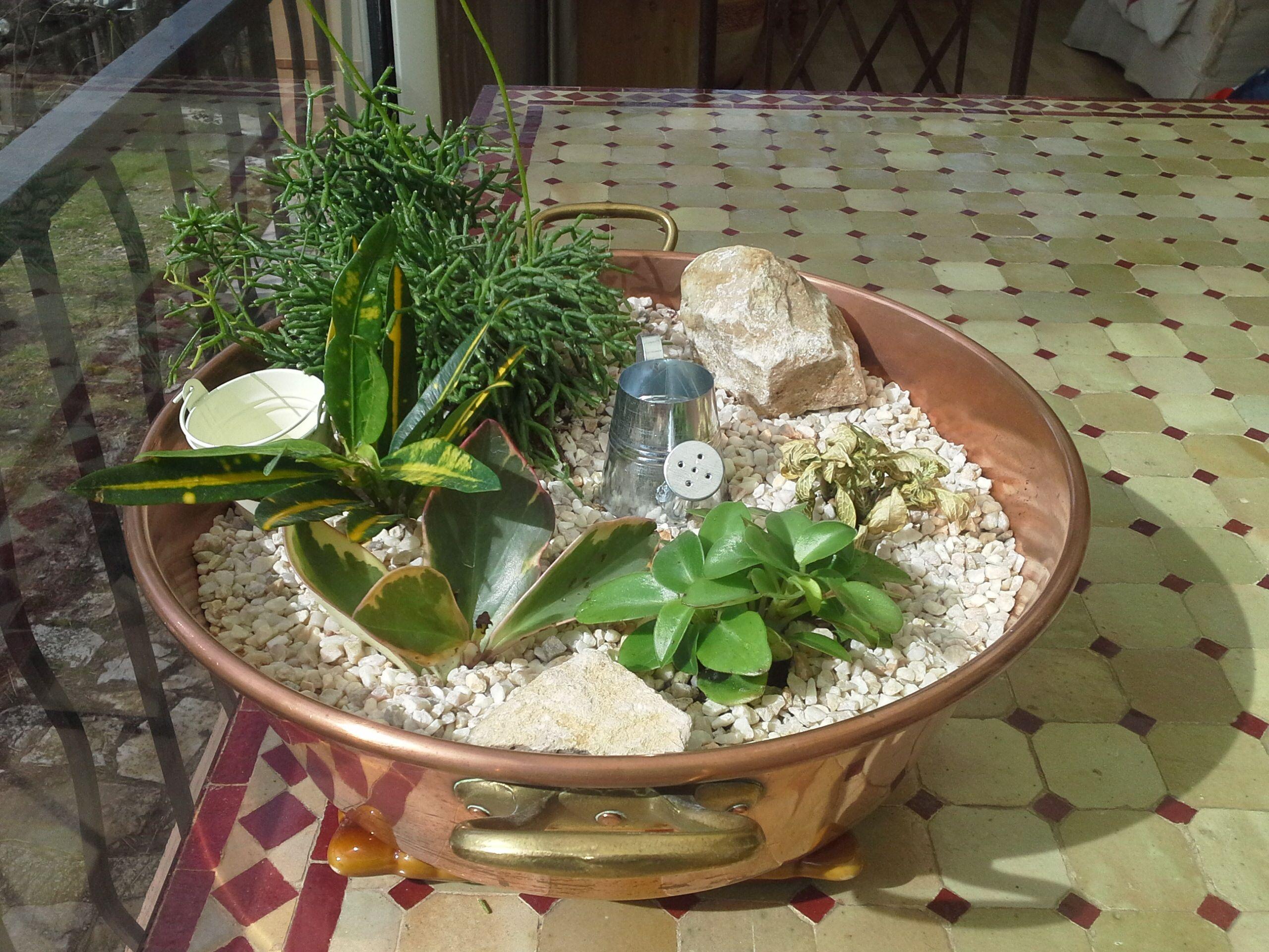 mini plantes grasses mini plante grasse plantes grasses photos pu59 jornalagora mini plante. Black Bedroom Furniture Sets. Home Design Ideas