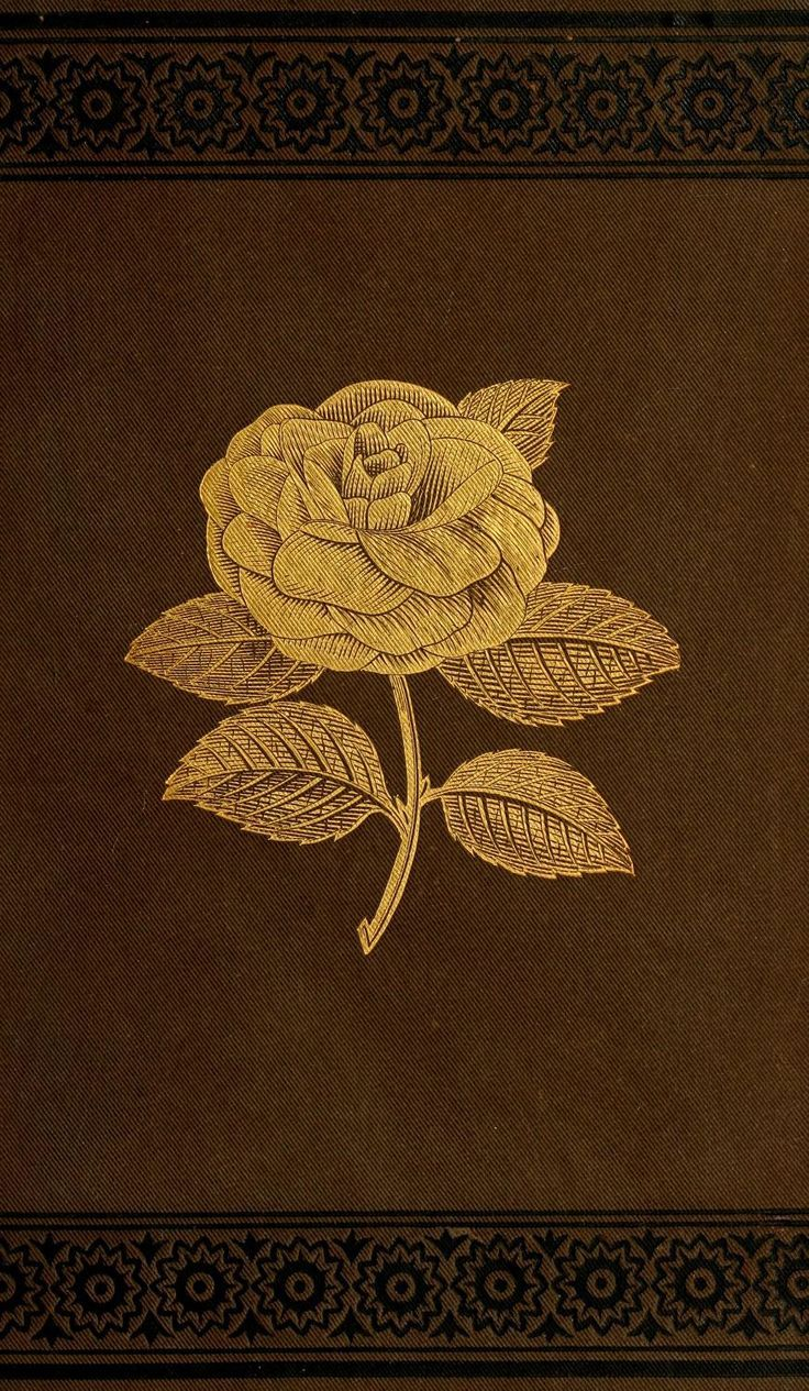 Book cover. Practical camellia culture. 1880