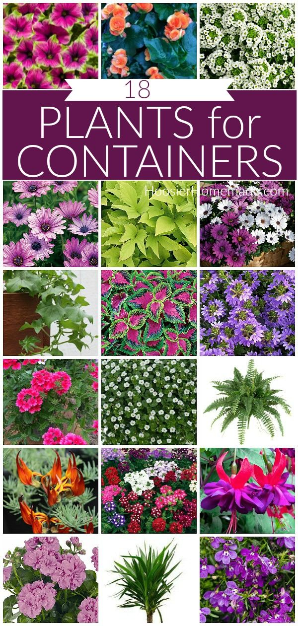 Plants for Containers Plants for Containers