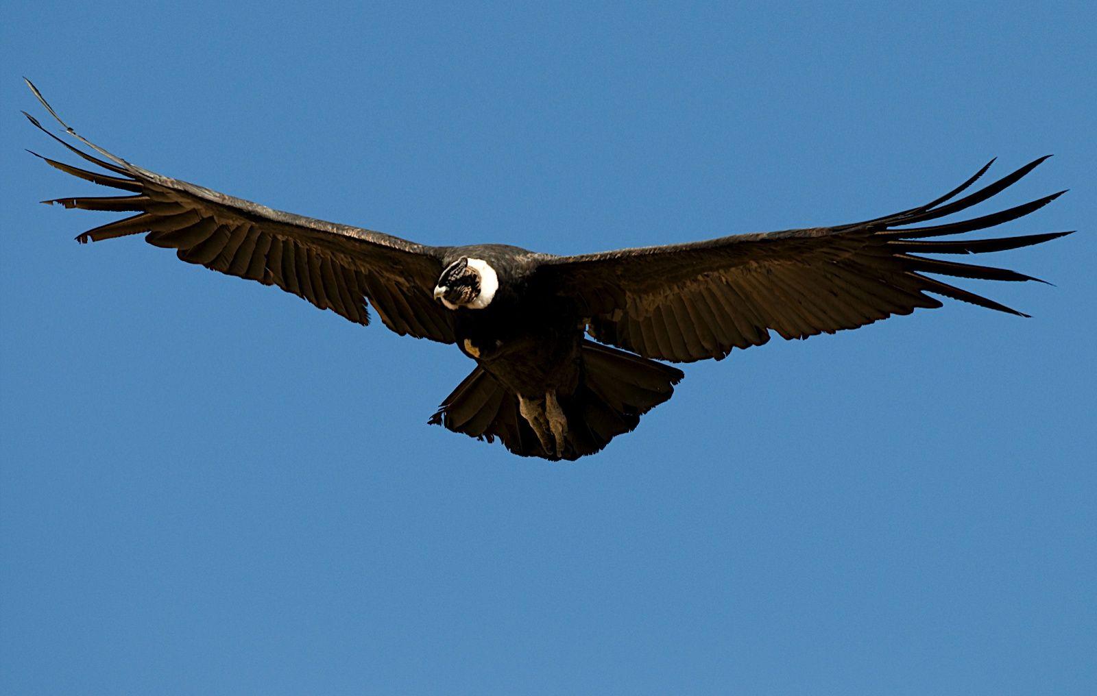 Deja La Vida Volar El Manque El Cóndor Bloemen Schilder