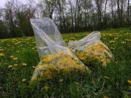 Sherm's Organic News: Liver Cleanse, Dandelion Formula