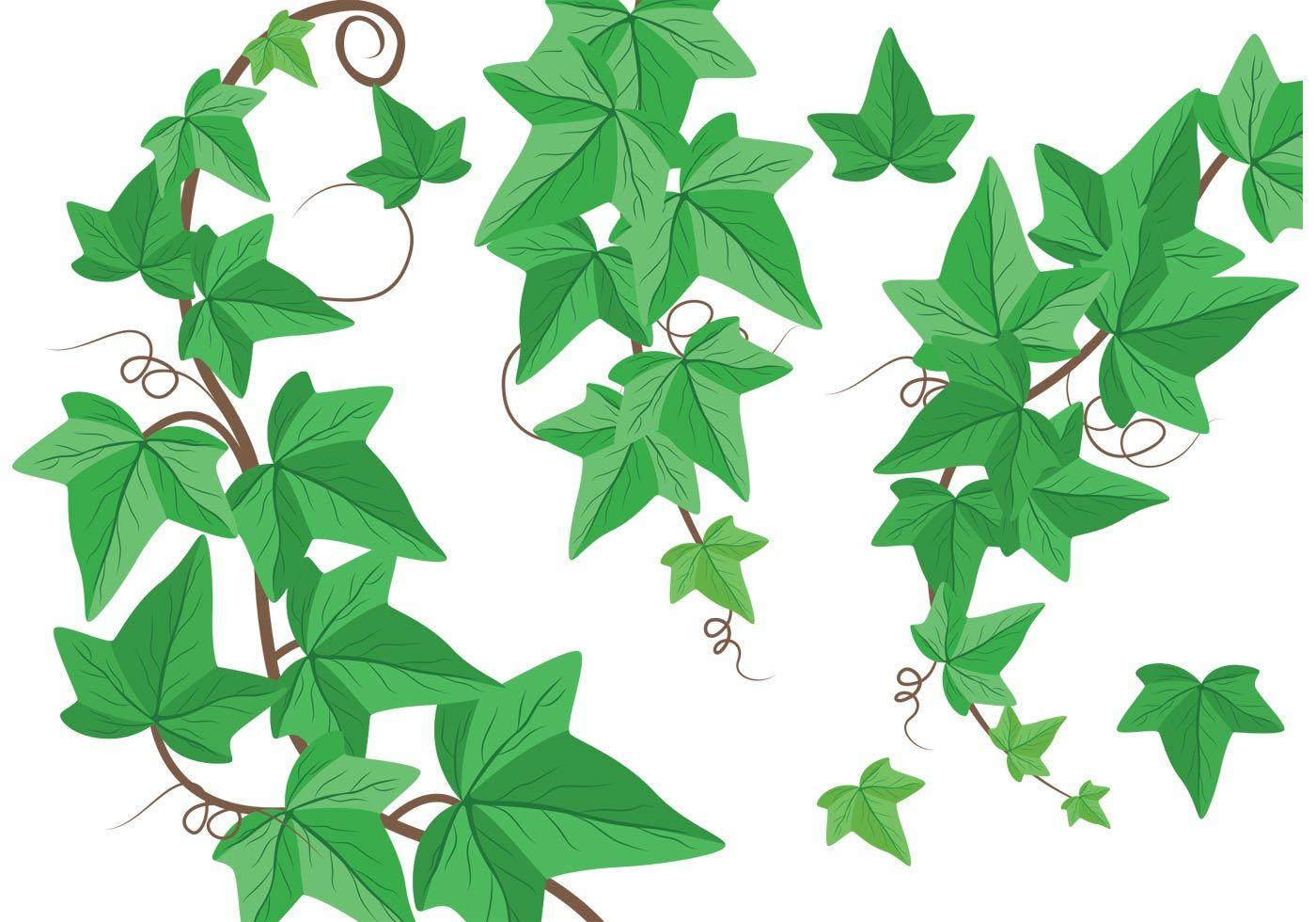 Ivy Vine Clip Art