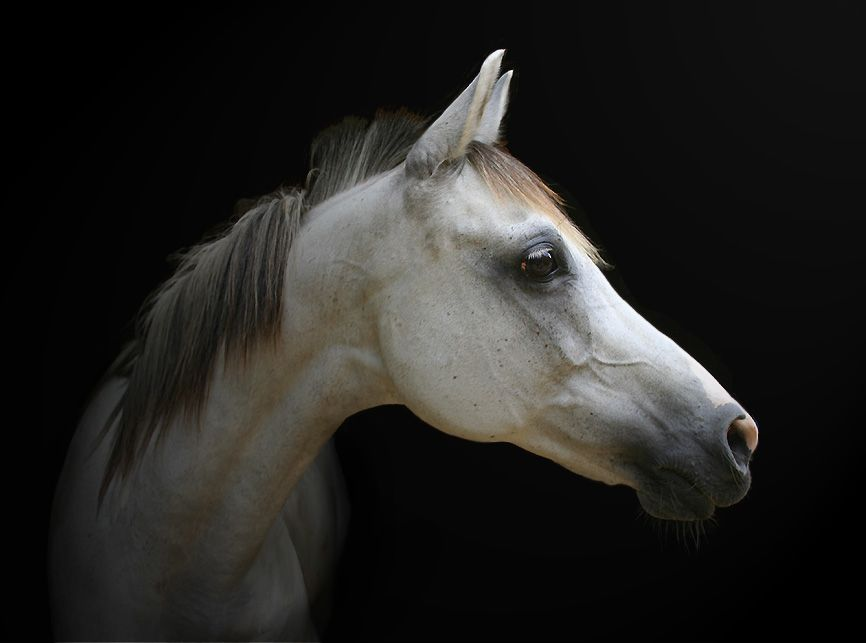 Chase a fier by Equines