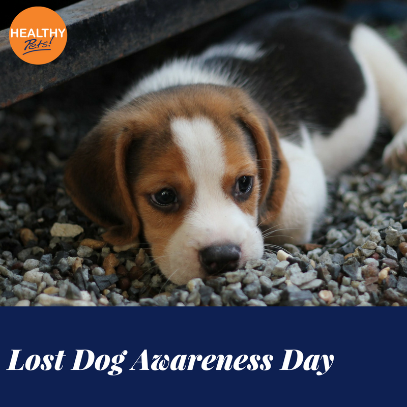 It S Lostdogawarenessday Here Are Some Handy Tips If Your Pet Goes Missing Check Microchip Databases Check With Vets A Losing A Dog Animal Charities Pets