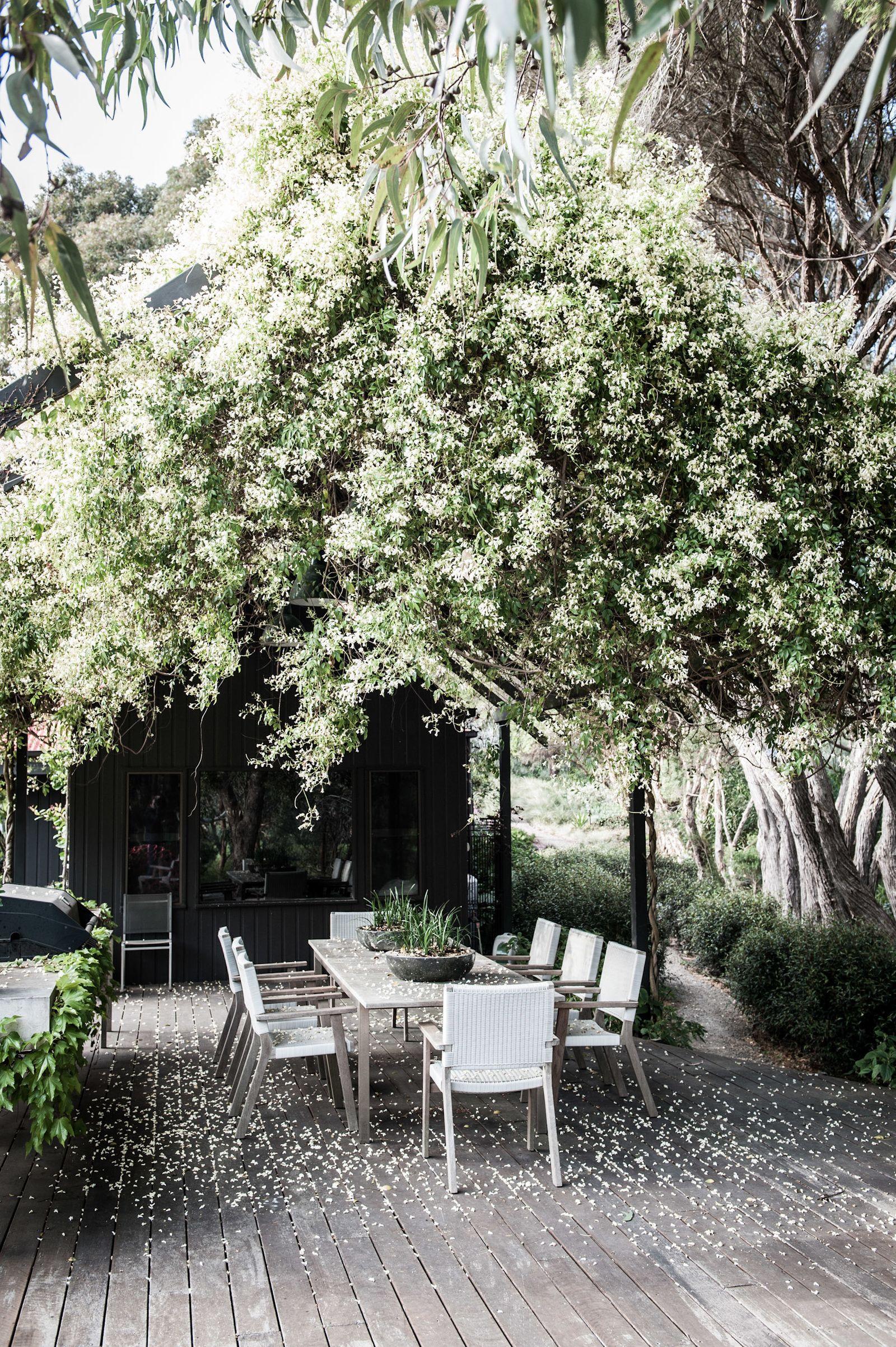 astounding garden seating ideas native design | Alison Hoelzer Photography - Gardens | Australian native ...