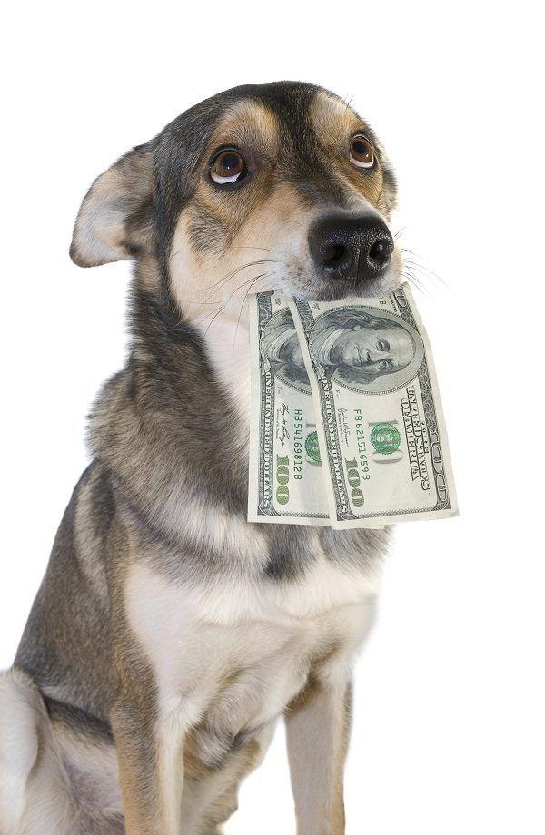 Making Money By Dog Breeding Happy Animals Dogs Dog Activities