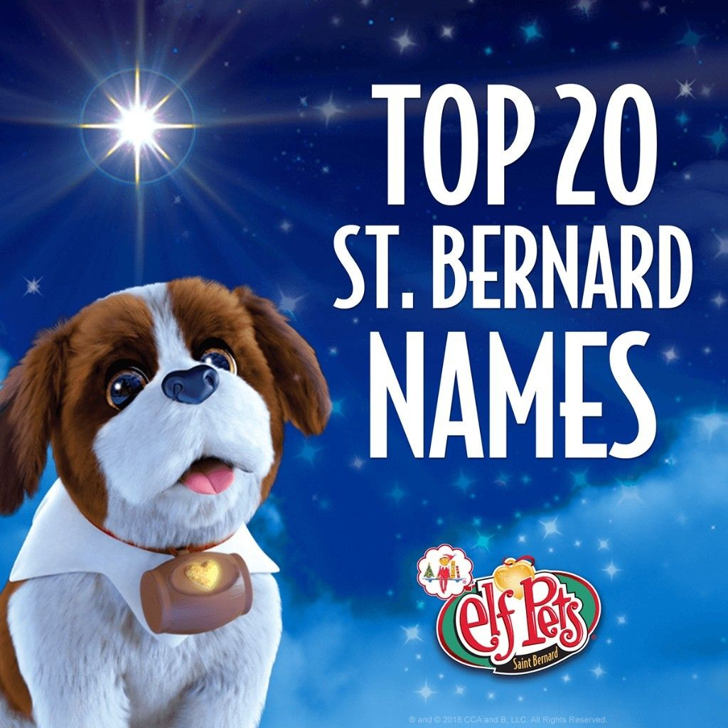 Saint Bernard Names Puppy Names The Elf On The Shelf Santa S Saint Bernards Elf Pets St Bernard Puppy Puppy Names