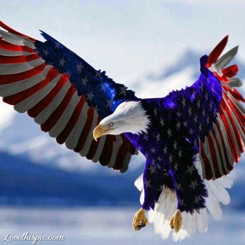 american eagle animals cool flag patriotic eagle american of july july 4 july fourth of july