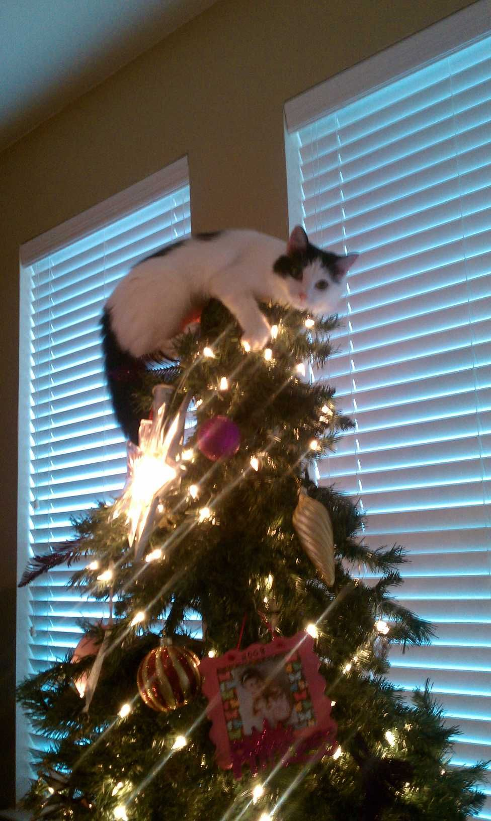Tree Topper This Is A Perfectly Good Reason To Have Spray Bottles At Christmas Poopy Kitty Cat Christmas Tree Christmas Animals Christmas Cats