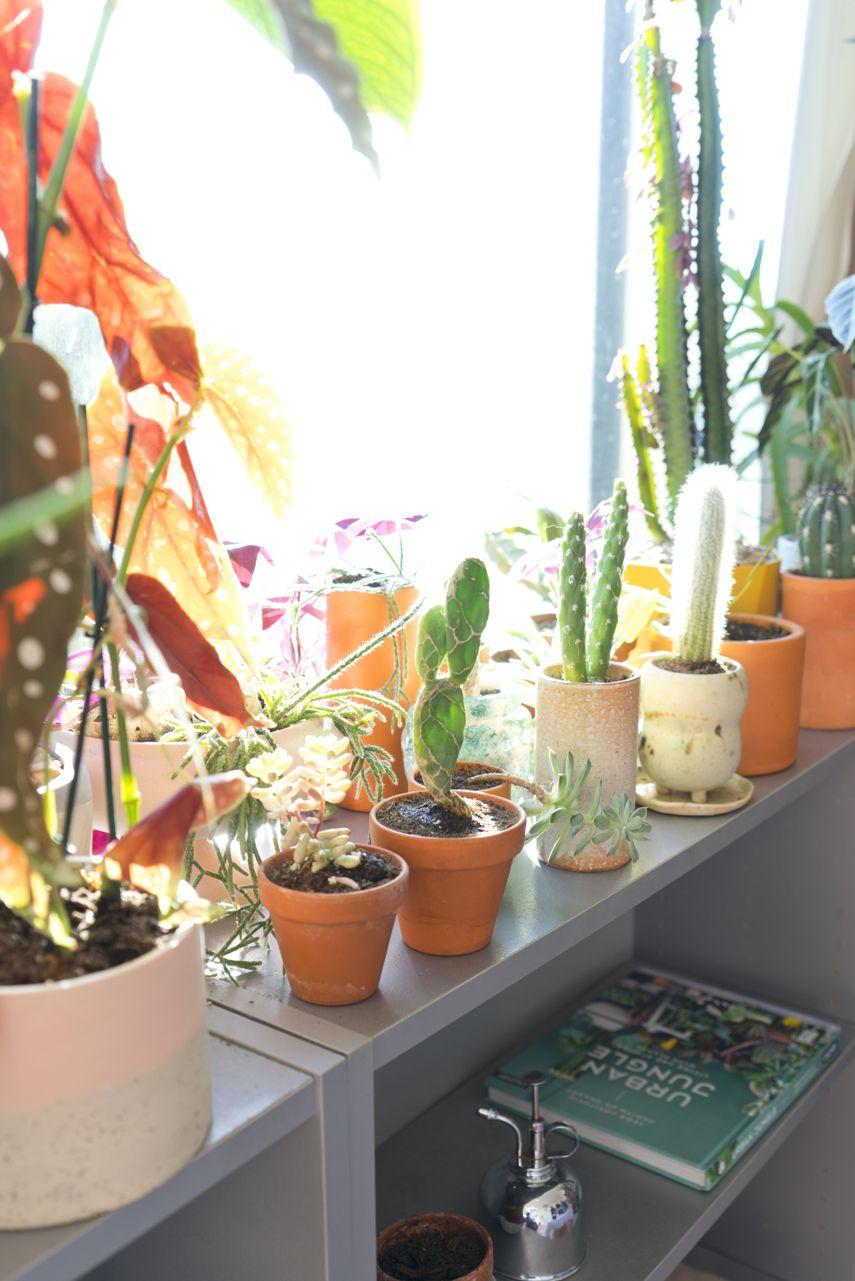 Urban Jungle Bloggers X Etsy Plants Indoor Garden 400 x 300
