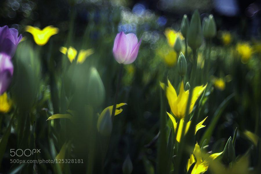 IMG_7347.jpg by ItoodMuk #nature