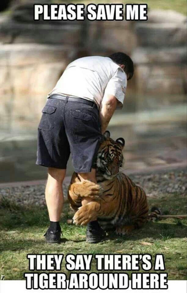 Scaredy cat Tiger
