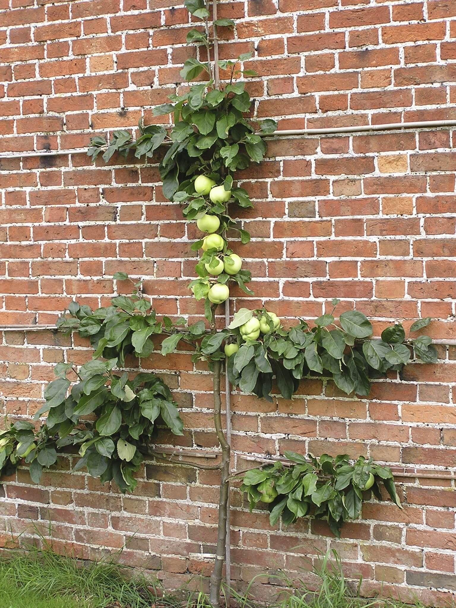 27 Garden Trellis and Lattice Ideas Wood & Metal