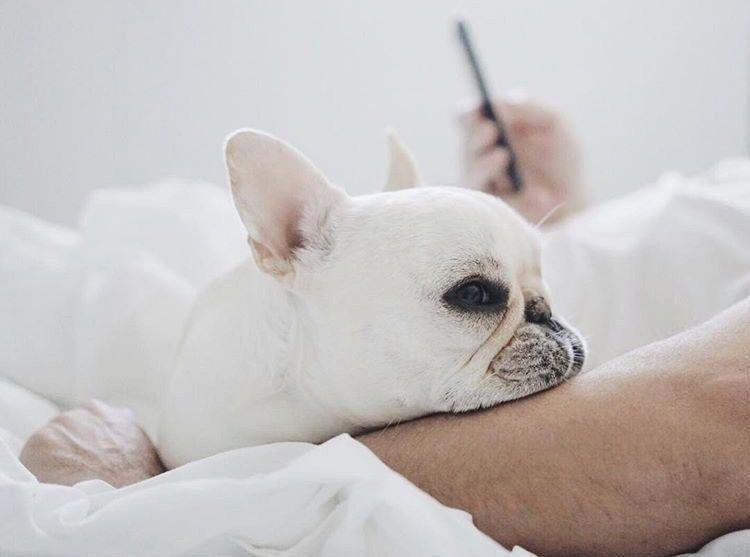 English Bulldog Puppies For Sale In Orlando Florida References