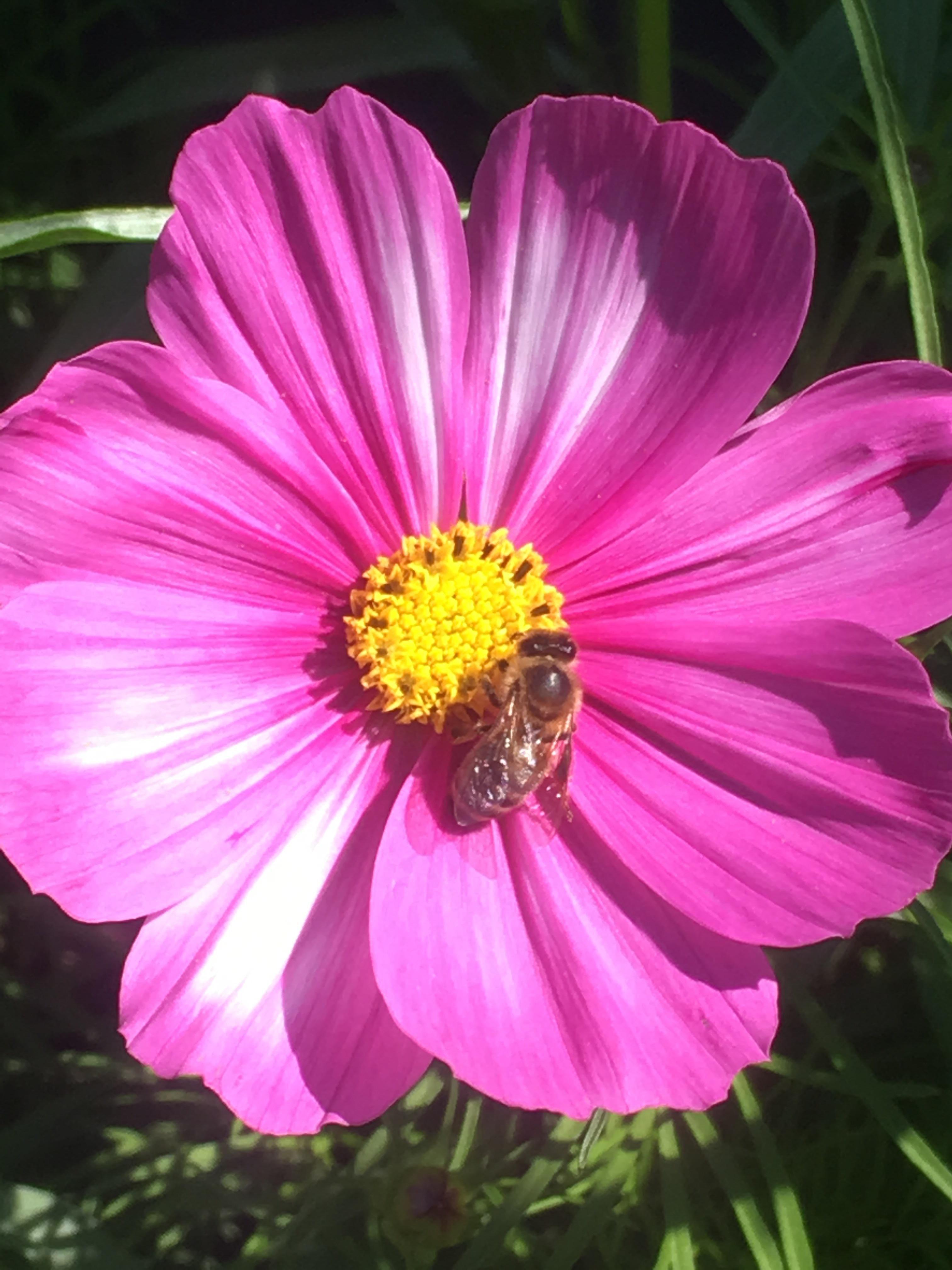 Oh how i love bees gardening garden diy home flowers