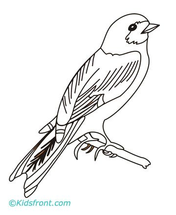 Coloring Pages House Wren