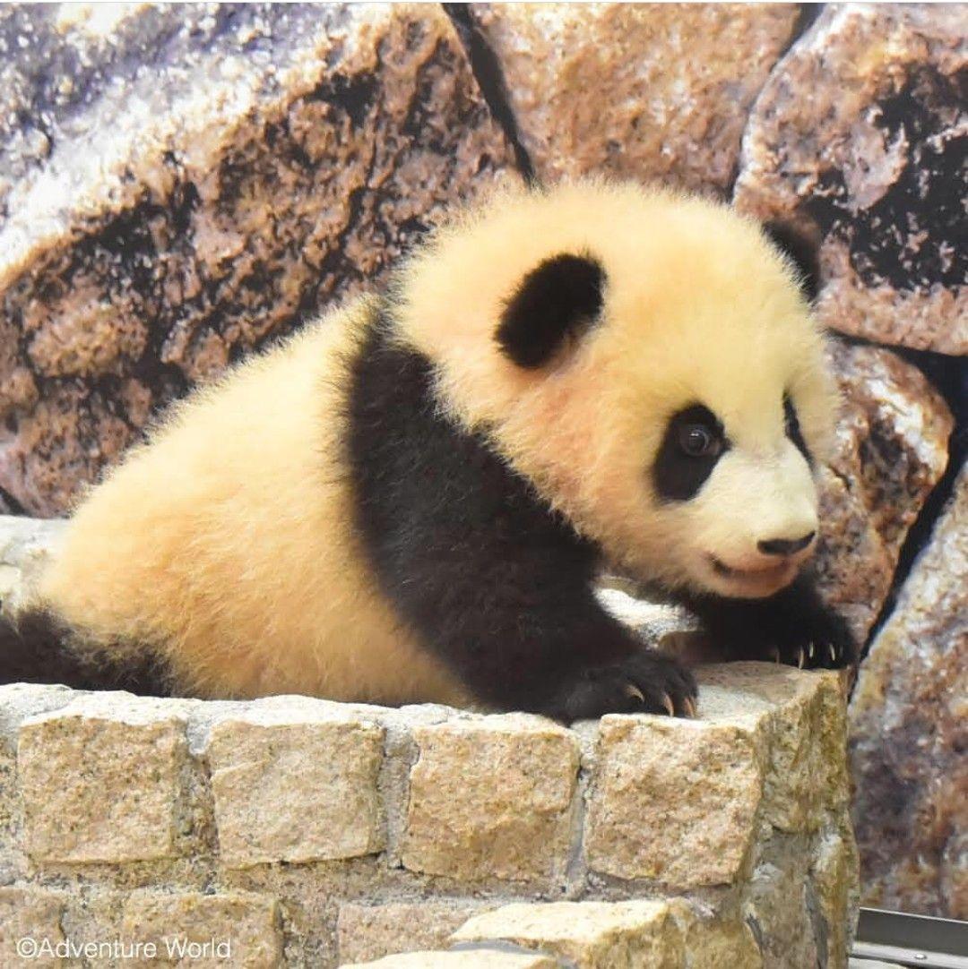 Pin Von Pandas Auf Pandas
