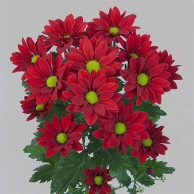 Pin Su Chrysanthemum Spray