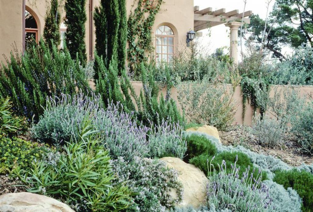 Charming Mediterranean Landscaping Plants With Images