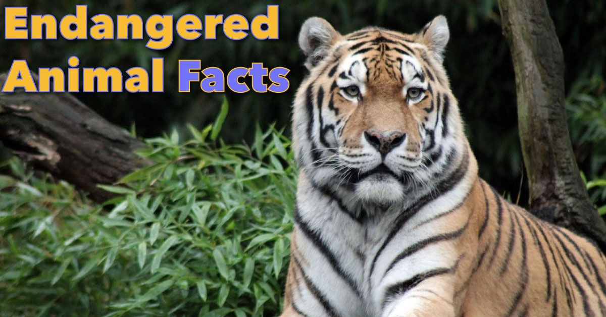 Endangered Animals Facts For Kids Information & Pictures