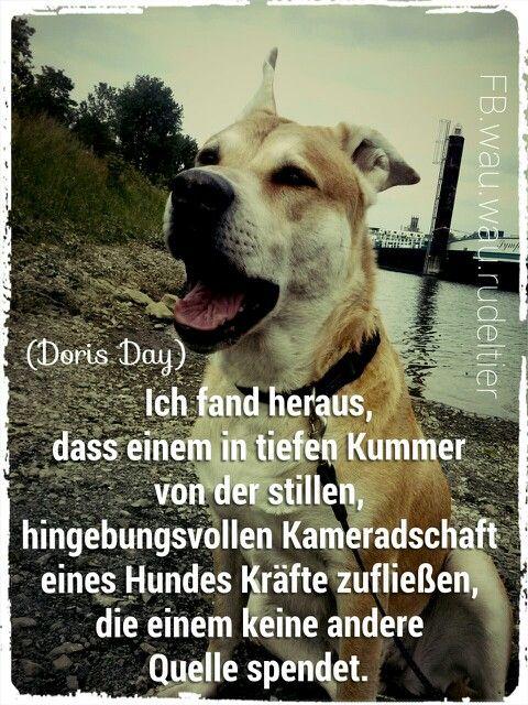 Ich fand heraus, dass einem in tiefen Kummer von der stillen, hingebungsvollen Kameradschaft eines Hundes Kräfte zufließen, die einem keine andere Quelle spendet.  (Doris Day)  FB.wau.wow.Pink