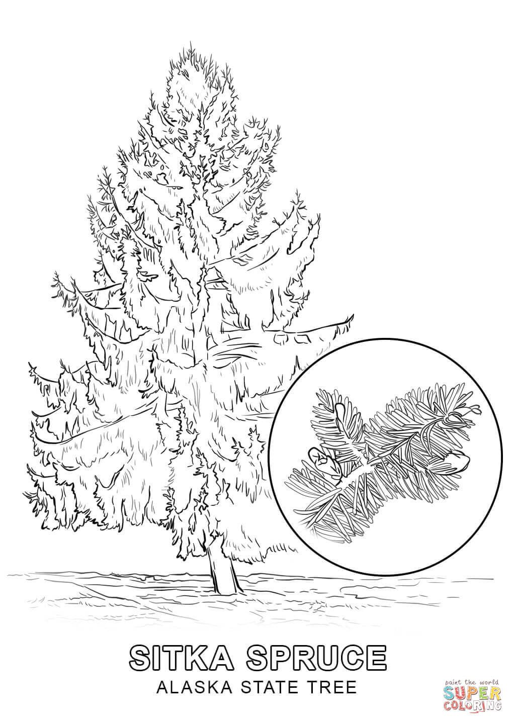Alaska State Tree Coloring Page Free Printable Coloring Pages Flag Coloring Pages Flower Coloring Pages Tree Coloring Page