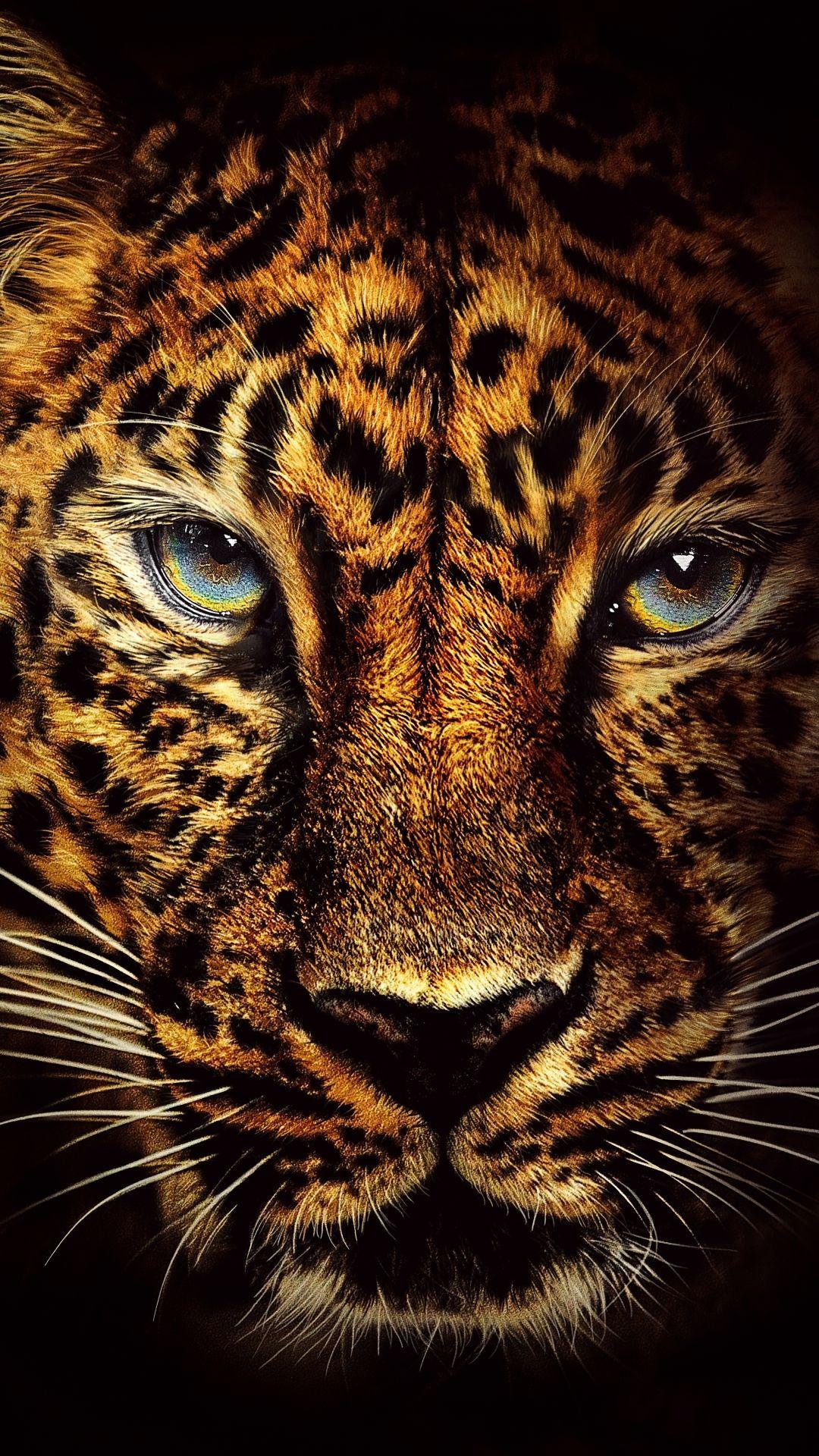 Jaguar Face animal phonewallpaper in 2020 Jaguar
