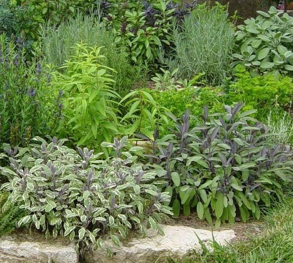 Herb Garden Ideas For Patio herb garden design ideas sage garden design ideas patio decorating