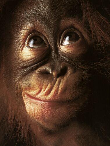 Encyclopaedia of Babies of Beautiful Wild Animals: Baby Orangutan adventures