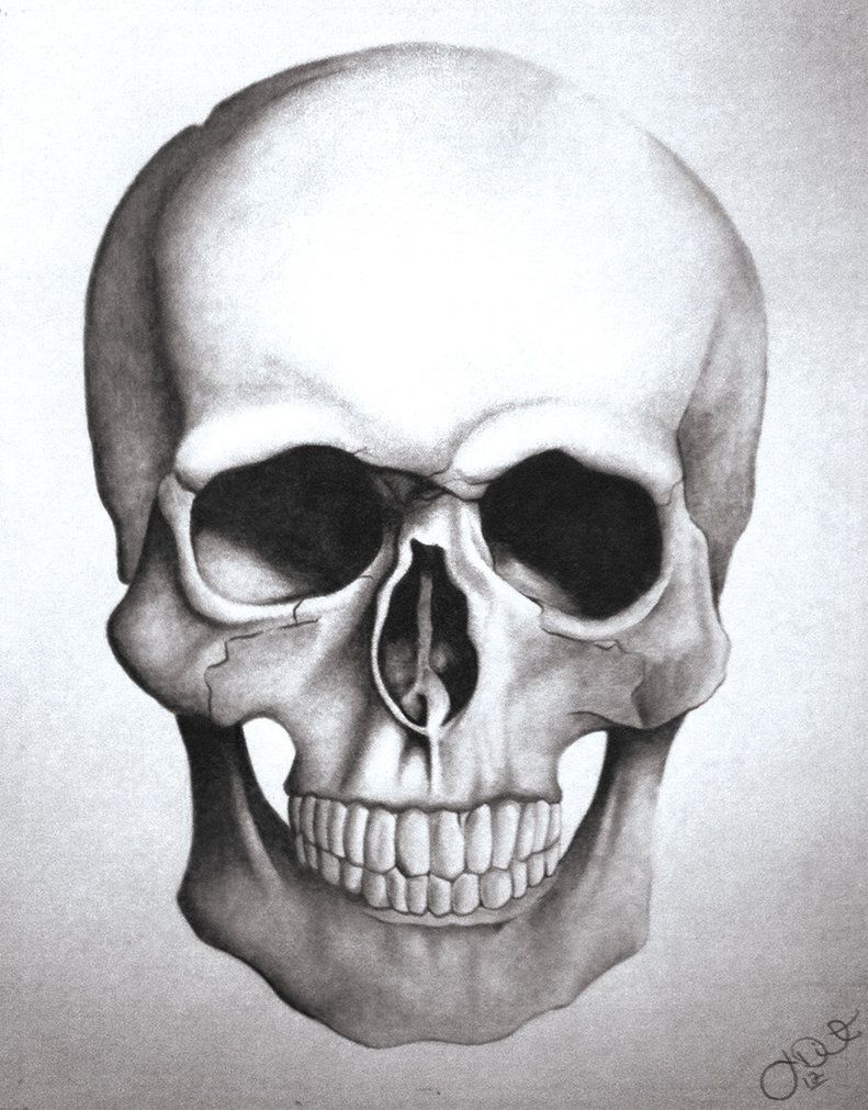 How To Draw A Skull Step By Step In These Pics I Have A Human Skull