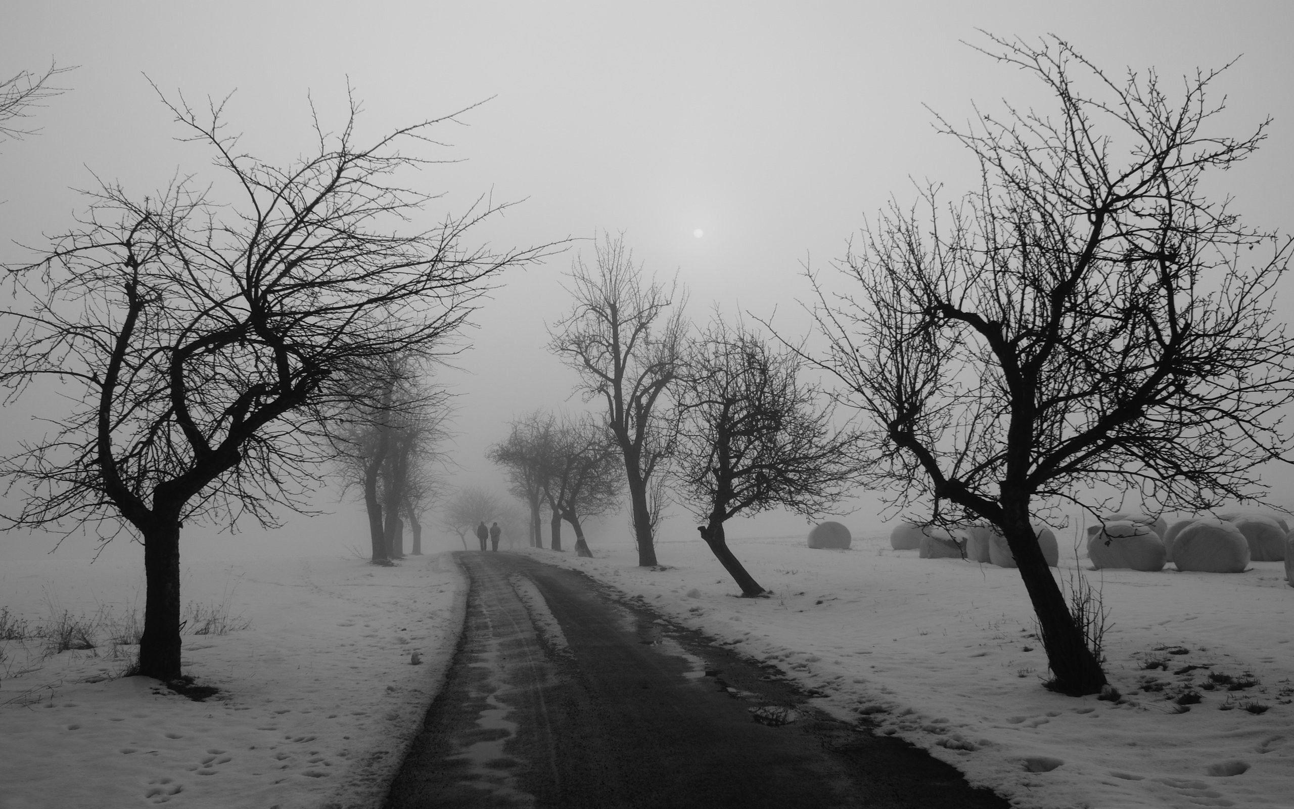 Route D Hiver En Noir Et Blanc Winter Neige Fond D Ecran 2560x1600 Fond D Ecran Telecharger Paysage Noir Et Blanc Paysage Hiver Images Paysages