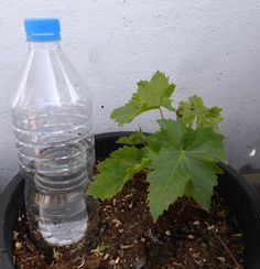 Sistema De Riego Casero Por Evaporación Condensación Solar Lawn And Garden Growing Vegetables Self Watering