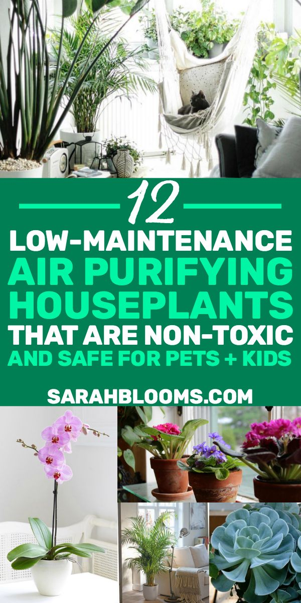 20 Air Purifying Houseplants Safe For Dogs Cats Air Purifying Plants Plants Indoor Plants