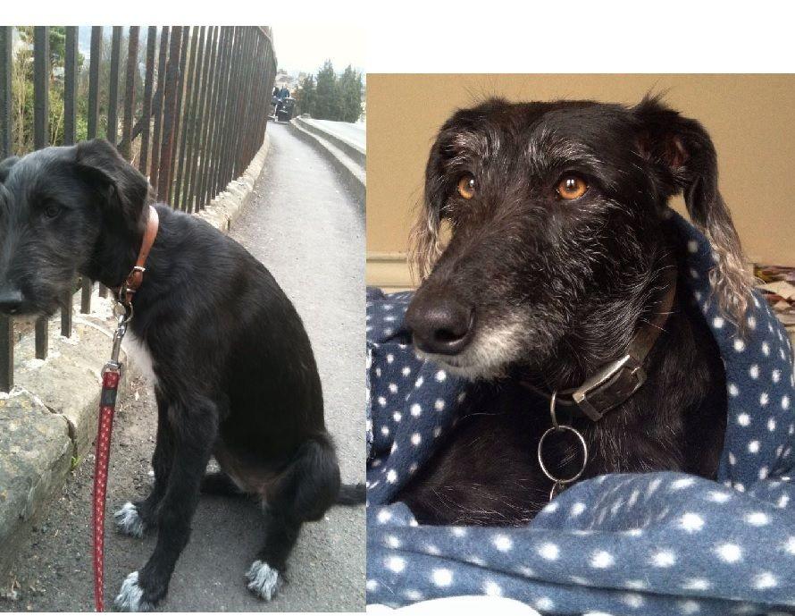 Fabulous Flossie Pet Shop Online Pet Store Pets Online