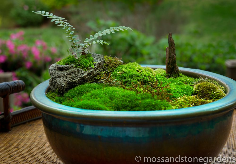 Tabletop Moss Garden   Must Make One Of These.