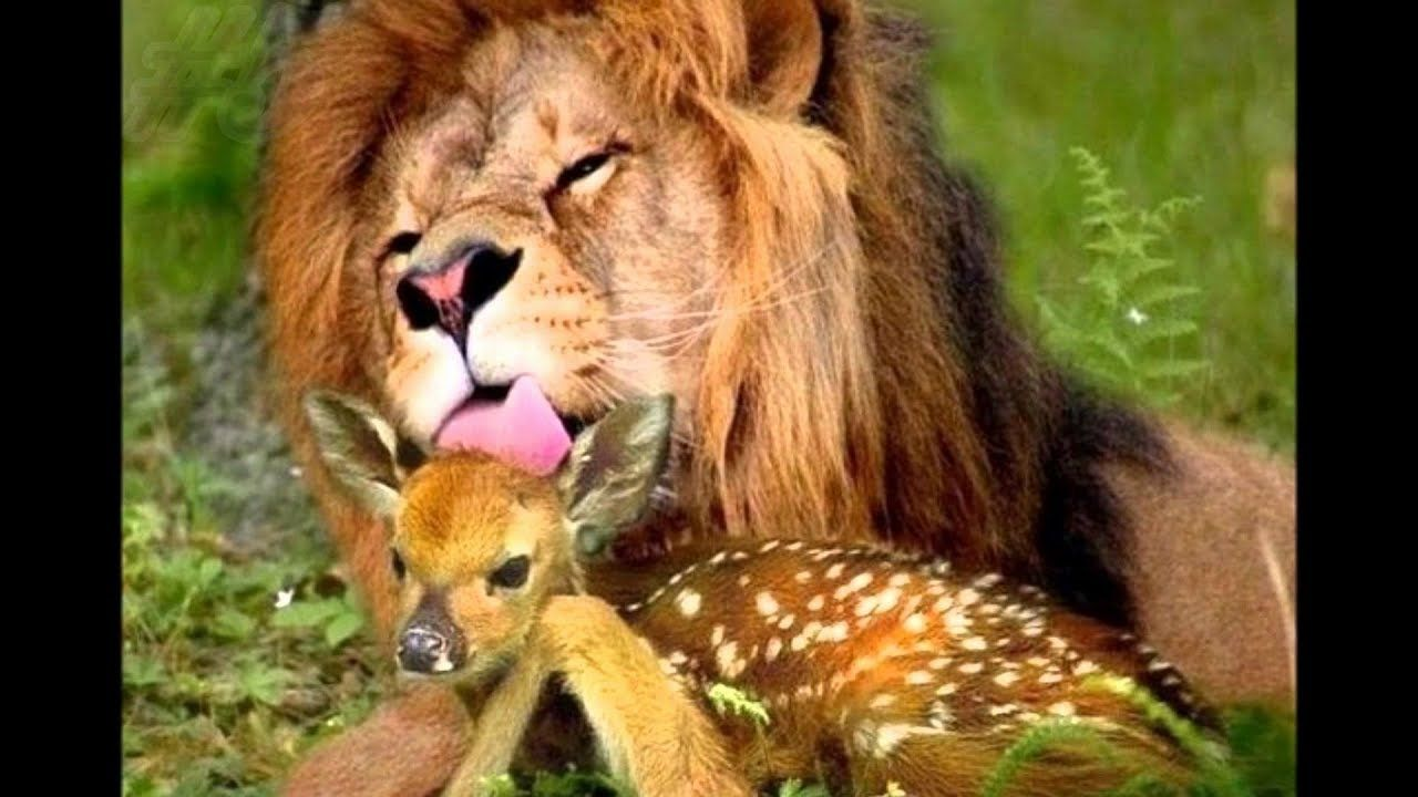 Unbelievable Unlikely Animals Friendships Compilation 2019