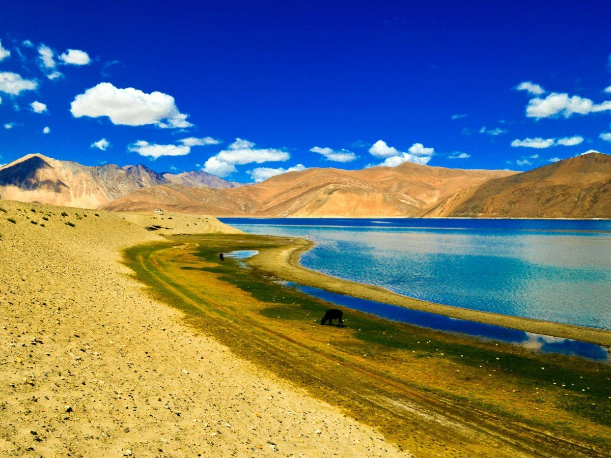 Pangong Tso Lake, a narrow saline lake in the Himalayas between India and Tibet. The bright blue water, contrasted by the mountains, is absolutely breathtaking.