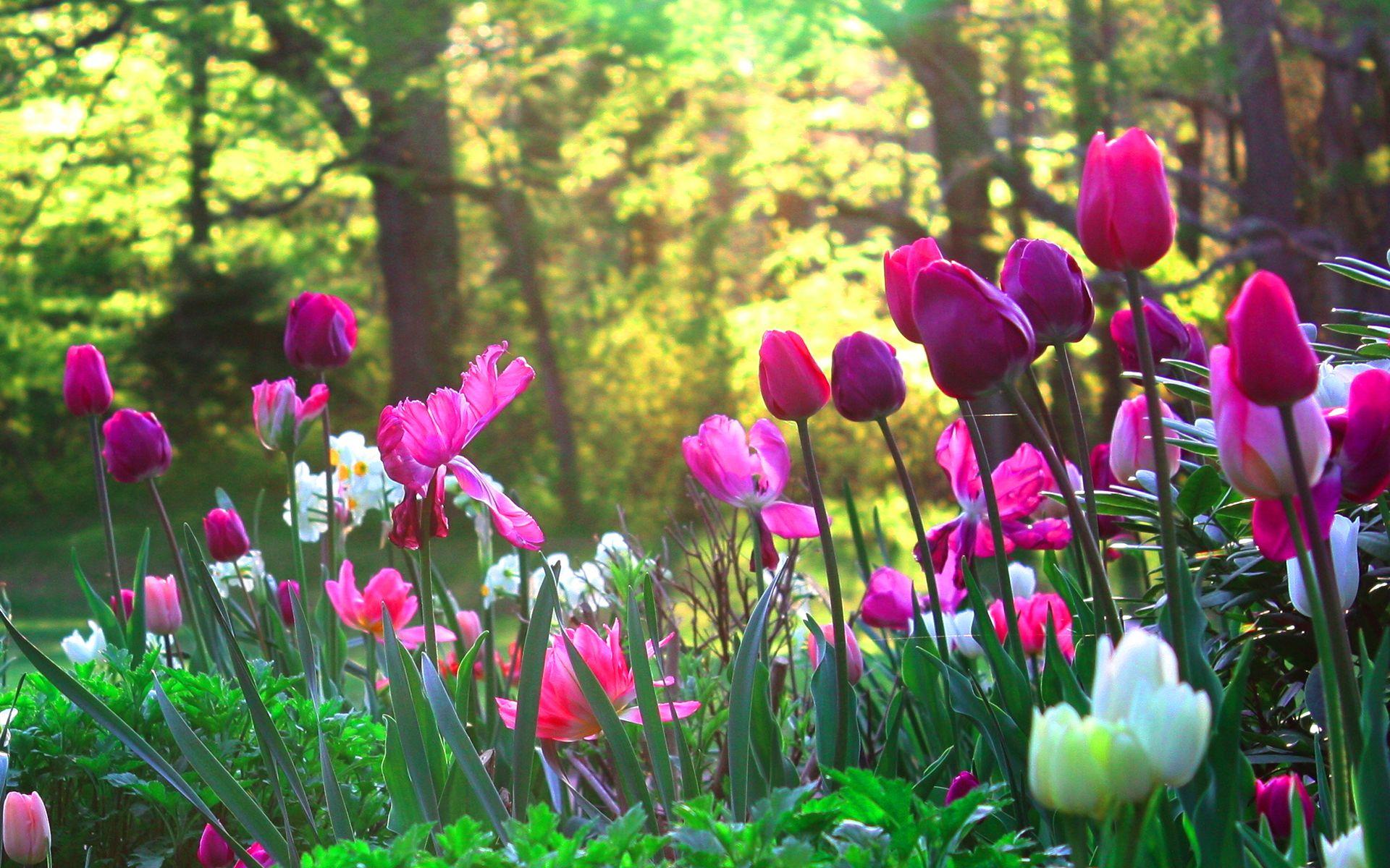 Create A Gorgeous First Impression With These Fuss Free Gardening Options Easy Diy Homedecor Design Tulips Garden Flower Garden Garden Vines