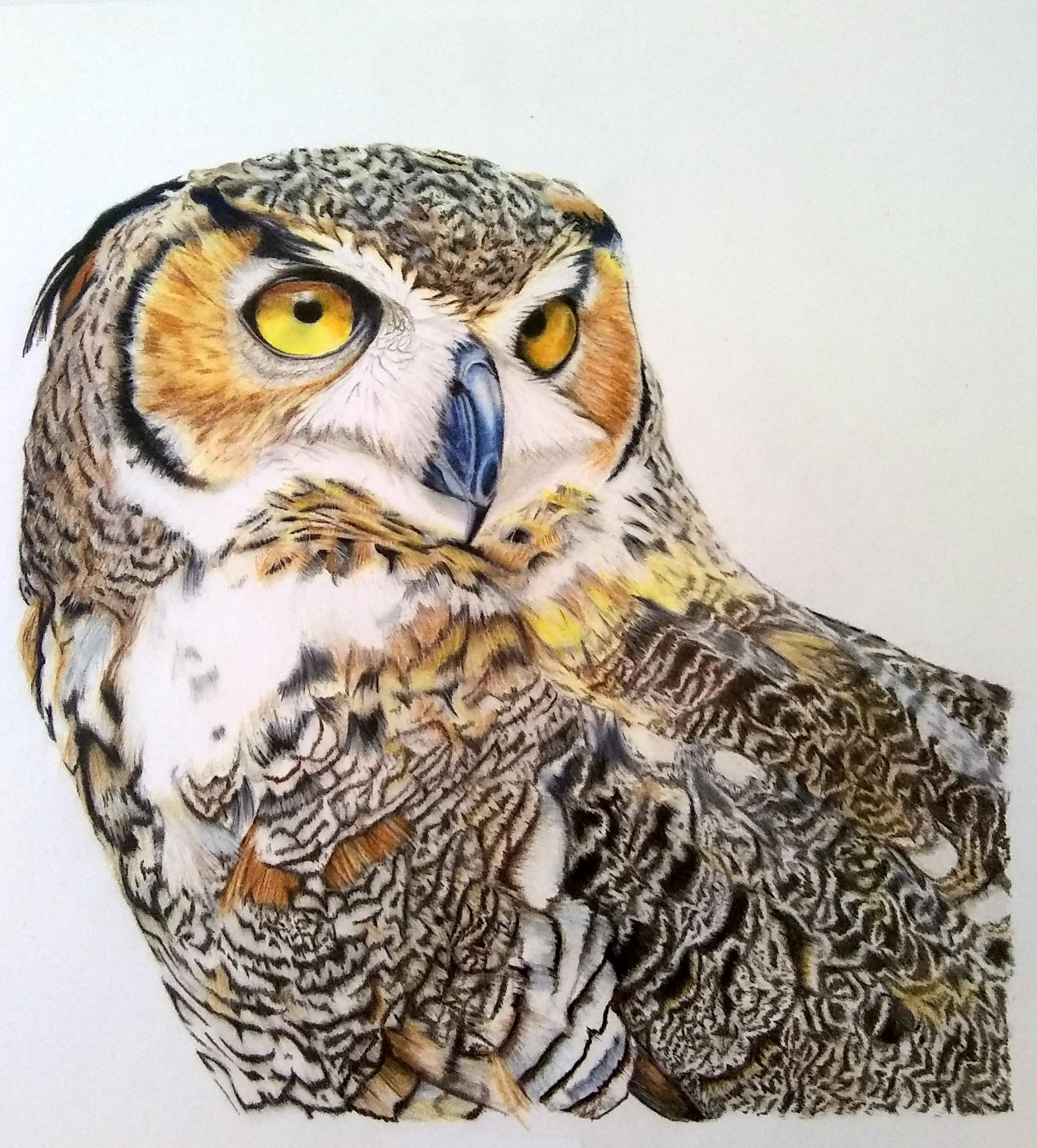 Speed Drawing Of An Owl Drawings Owl Art