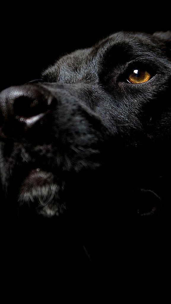 Dog Muzzle Nose Shadow Dark 25934 640x1136 Dog Muzzle Black Dog Dog Wallpaper Cool black dog wallpaper for iphone