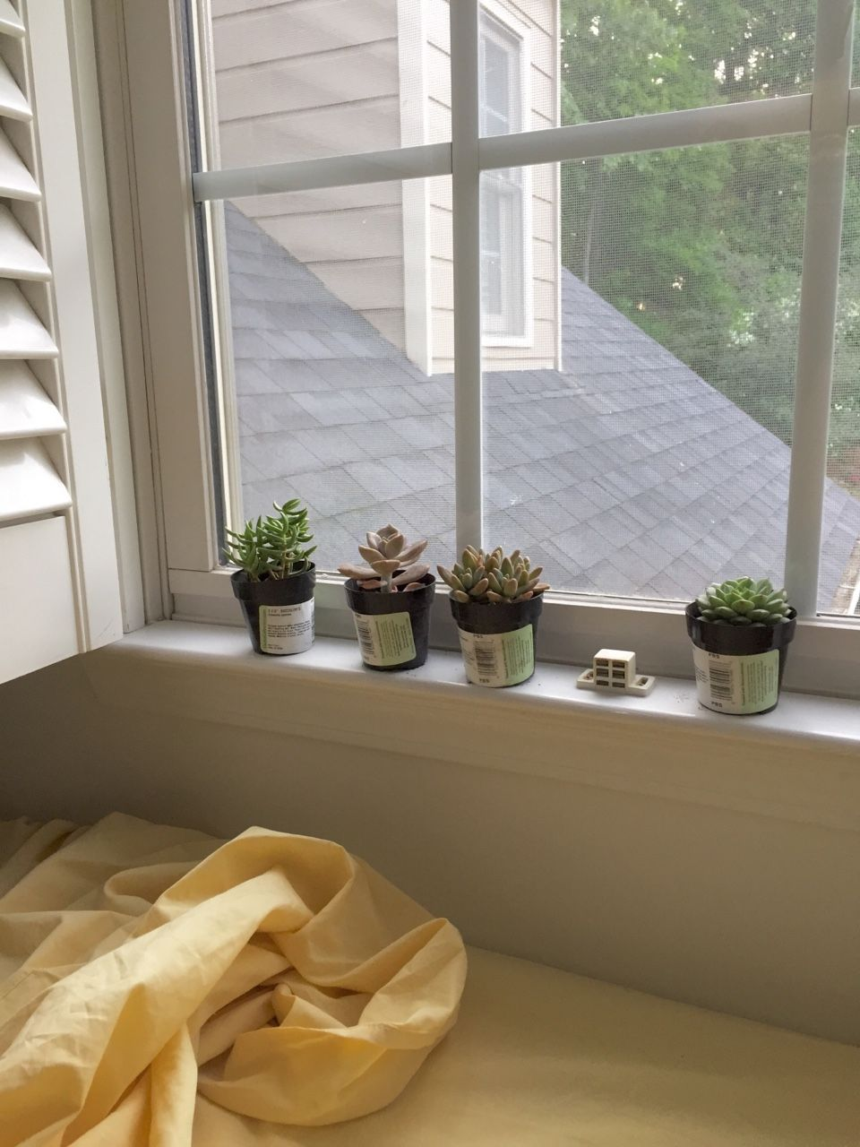 Aesthetic White Bedroom With Plants
