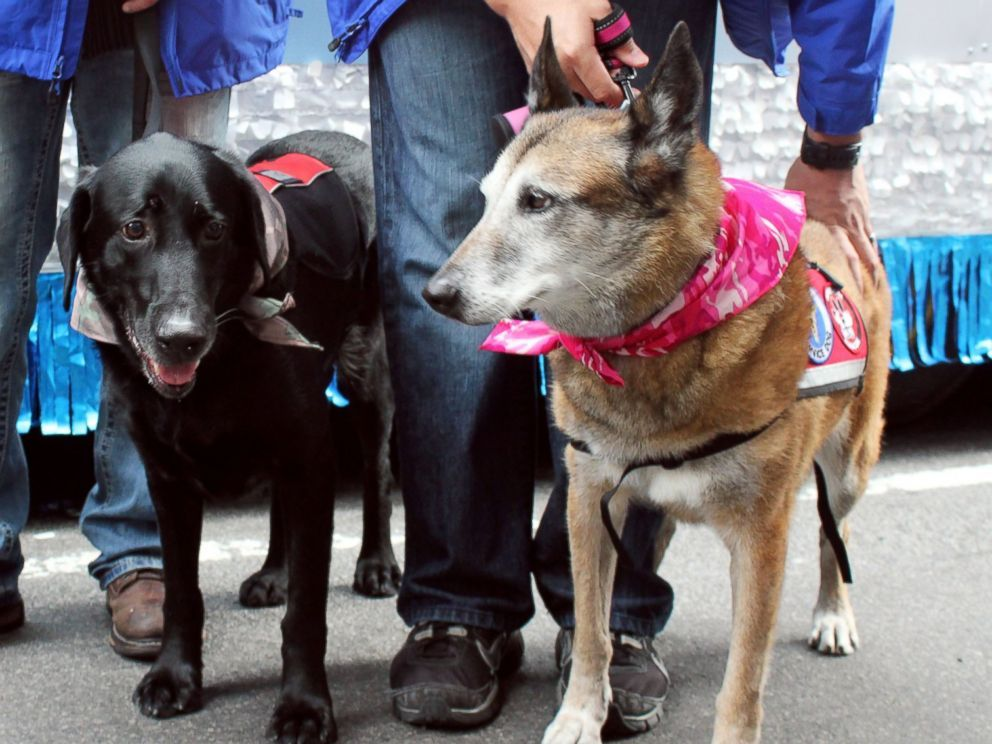 Dogs of War Get Heroes' Salute at New York Veterans' Day