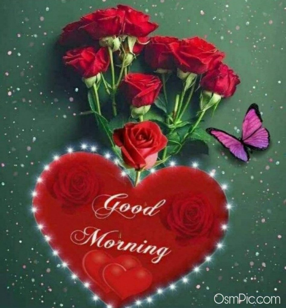 55 Good Morning Rose Flowers Images Pictures With Romantic Red Roses Good Morning Roses Good Morning Flowers Rose Good Morning Flowers